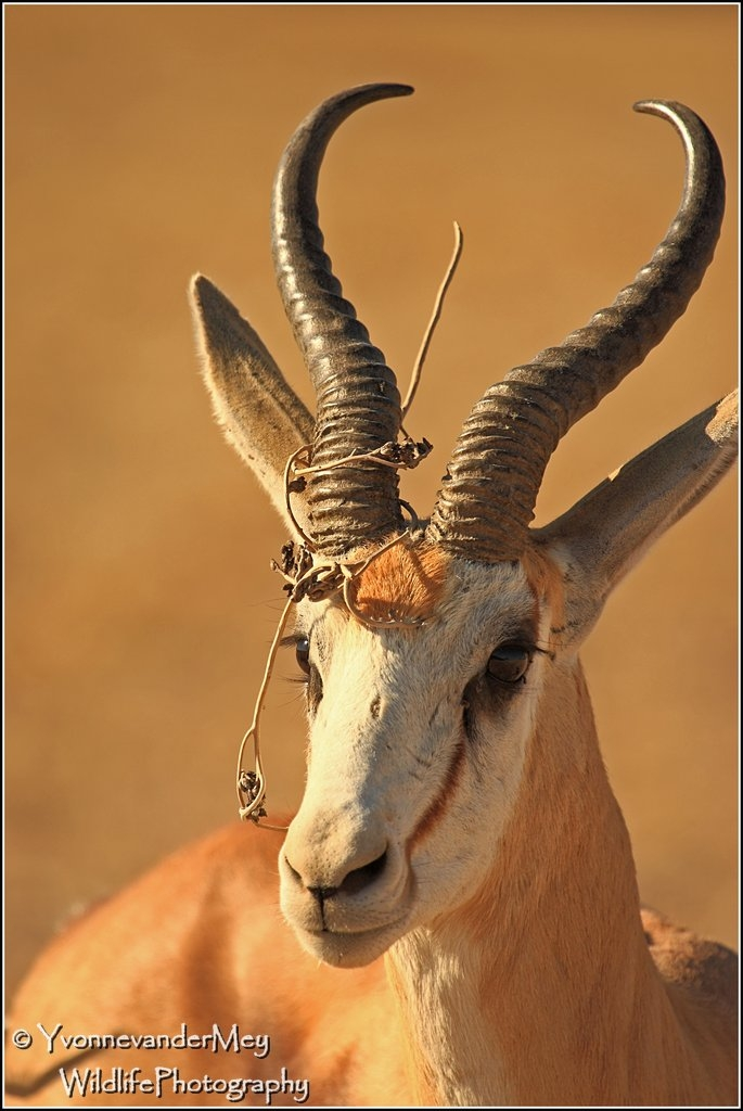 Bluetooth-in-Kalahari-copyright-YvonnevanderMey.jpg