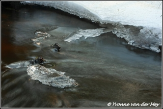 Ijs en stromend water / Ice and water flowing  (Copyright Yvonne van der Mey)