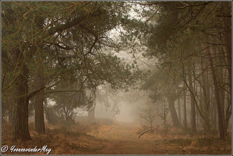 Mistige-bossfeer-copyright-YvonnevanderMey
