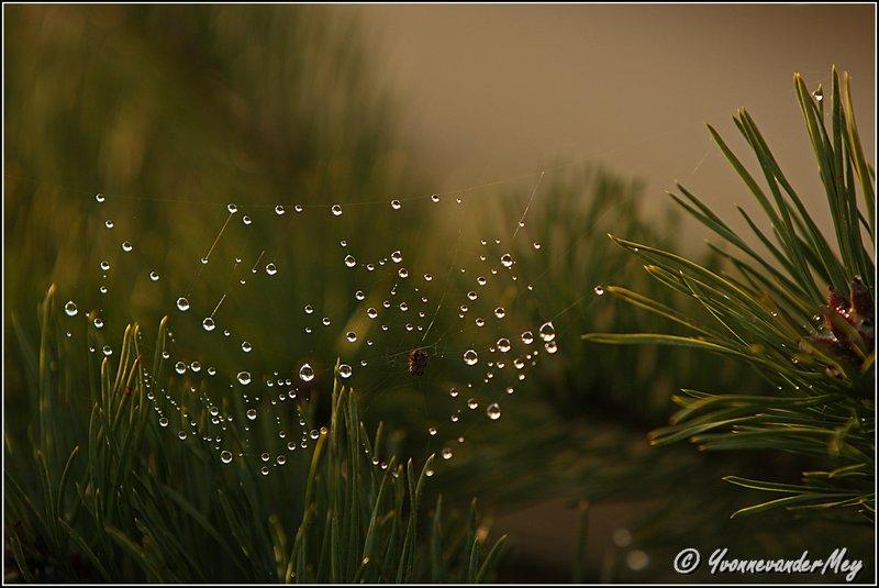 Stilleven-met-waterdruppels-copyright-YvonnevanderMey