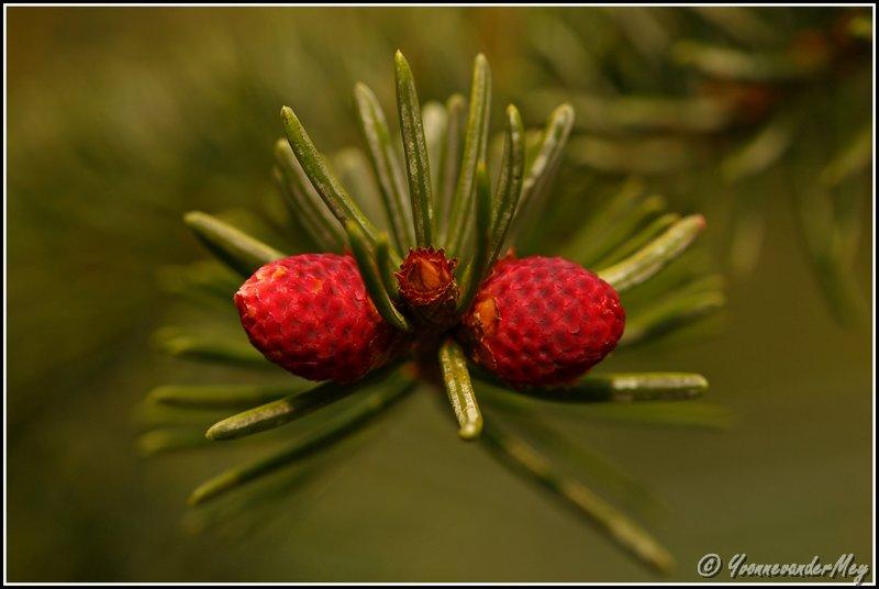 Stralend-rood-copyright-YvonnevanderMey
