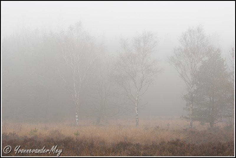 berken-in-mist-copyright-yvonnevandermey