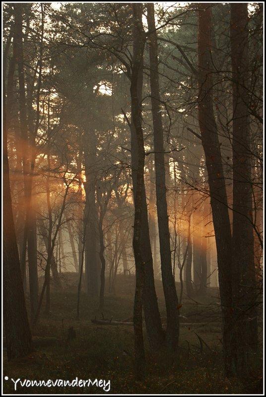 dubbele-zonneharp-copyright-yvonnevandermey