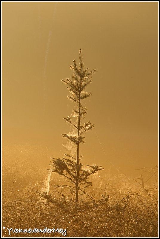 ingepakt-kerstboompje-copyright-yvonnevandermey