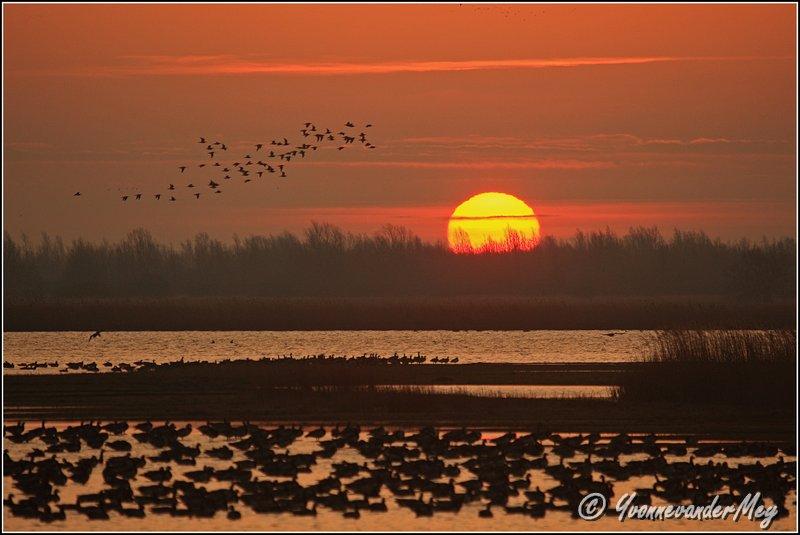 lauwersmeer-zonsopgang-copyright-yvonnevandermey