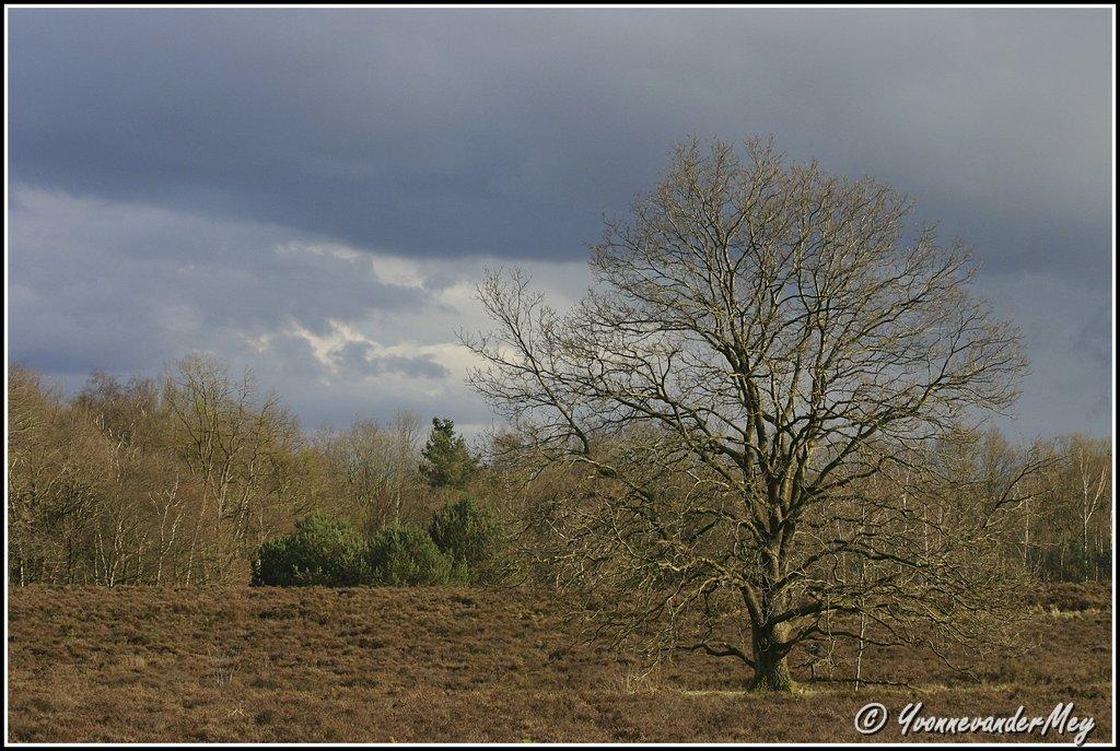 stilte-voor-de-storm-copyright-yvonnevandermey