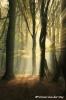 31-fairy-tale-copyright-yvonnevandermey