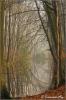Hierdensebeek-maart-2014-copyright-YvonnevanderMey