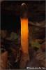 een-lichtje-in-de-duisternis-copyright-yvonnevandermey