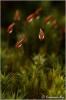 jong-haarmos-met-regendruppel-copyright-yvonnevandermey