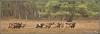 kudde-mouflons-copyright-yvonnevandermey
