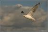 meeuw-in-landing-copyright-yvonnevandermey