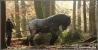 paardenkrachten-copyright-yvonnevandermey