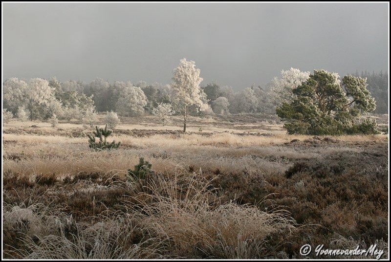 winterse-veluwe-copyright-yvonnevandermey
