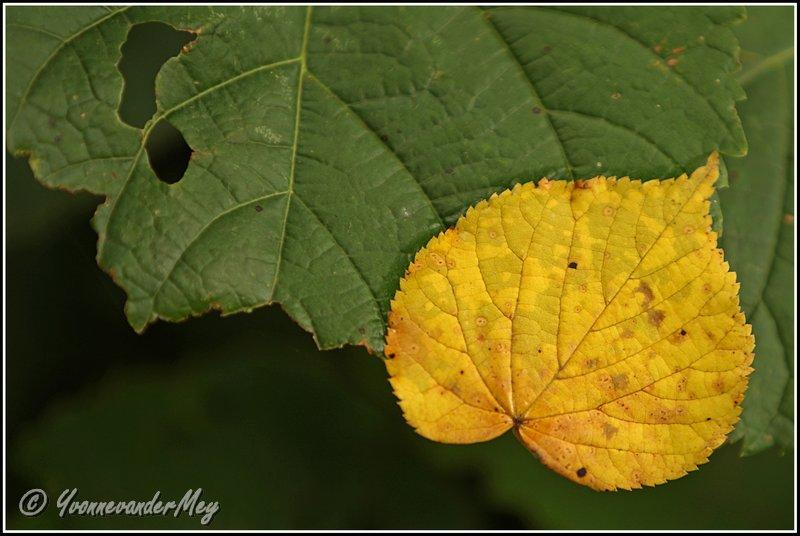yellow-and-green-copyright-yvonnevandermey