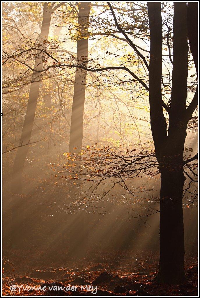 zonsopgang-in-herfstig-bos-copyright-yvonnevandermey
