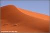 kalahari woestijn / kalahari dessert (Copyright Yvonne van der Mey)