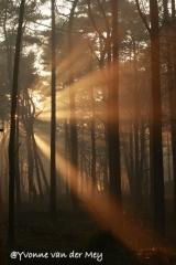 zonneharpen-in-leuvenumse-bossen-copyright-yvonnevandermey