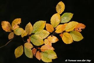 Herfstblad perfect bokeh (Copyright Yvonne van der Mey)
