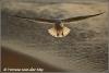 De vliegende IJsvogel