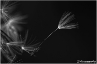 Loslaten-in-zwart-wit-copyright-YvonnevanderMey.jpg