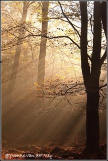 Zonsopgang-in-herfstig-bos-copyright-YvonnevanderMey.jpg