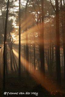 zonneharpen-in-Leuvenumse-Bossen-copyright-YvonnevanderMey.jpg