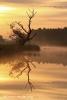 Boomsilhouet-in-Wieden-copyright-YvonnevanderMey.jpg