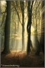 zonsopgang-in-speulderbos-copyright-yvonnevandermey
