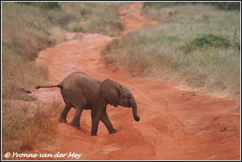 Elephants Yvonne Van Der Mey