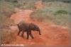 baby olifant verdwaald / baby elephant lost (Copyright Yvonne van der Mey)