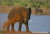olifant blaast stof / elephant blows dust (Copyright Yvonne van der Mey)