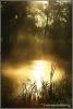 zonsopgang-oostvaardersplassen-copyright-yvonnevandermey