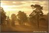 zonsopgang-sandbergse-veld-copyright-yvonnevandermey