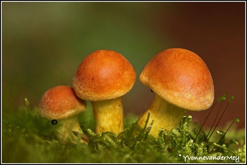 Drie-kleine-kleutertjes-copyright-YvonnevanderMey