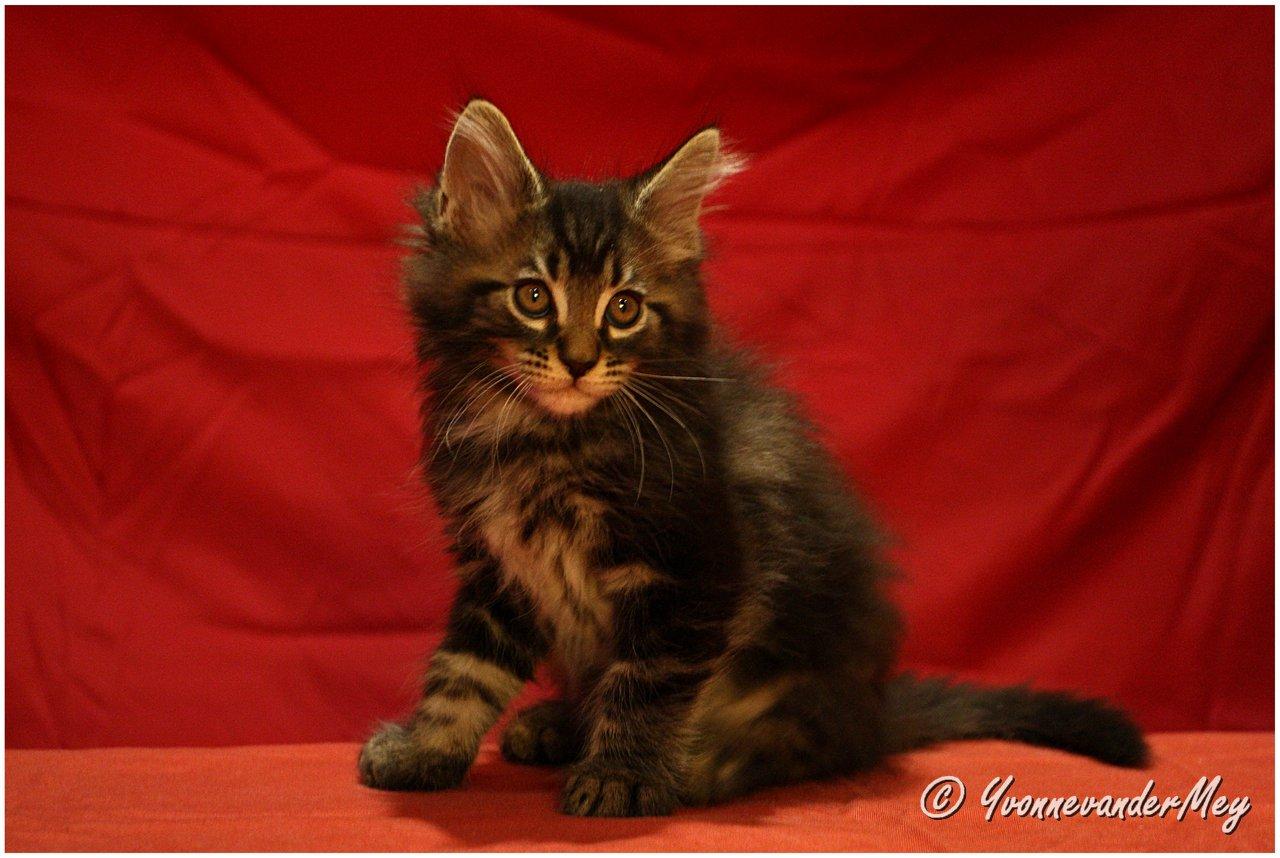 Kitten5-Dille-copyright-YvonnevanderMey