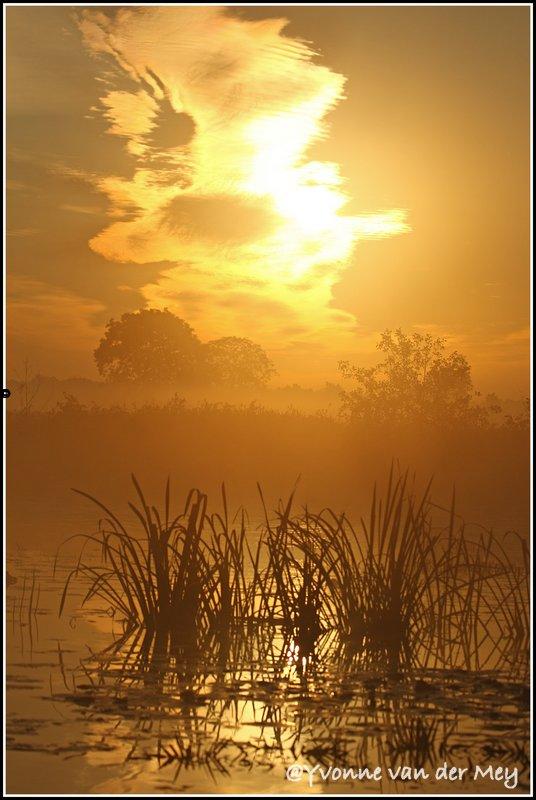 Mist-en-zon-in-Wieden-copyright-YvonnevanderMey
