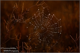 Herfst- copyright-YvonnevanderMey