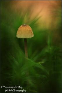 Kleine-paddo-in-mos-copyright-YvonnevanderMey