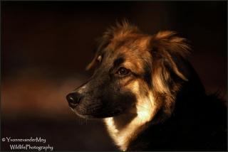 Portret-Kiki-copyright-YvonnevanderMey