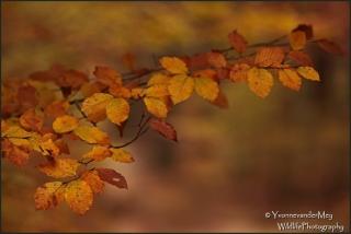 Ton-sur-ton-in-de-herfst-copyright-YvonnevanderMey