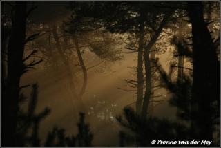 Mistsfeer vroege ochtend / Misty morning (Copyright Yvonne van der Mey)