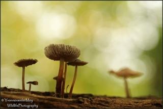 paddo-dorp-copyright-YvonnevanderMey