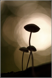 Hoogbenige-Schoonheid-copyright-YvonnevanderMey