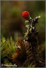 Rode-Heidelucifer-copyright-YvonnevanderMey