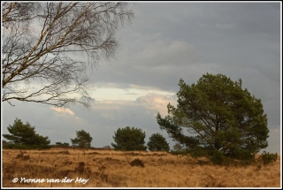 Winterse heide / Moor in winter (Copyright Yvonne van der Mey)