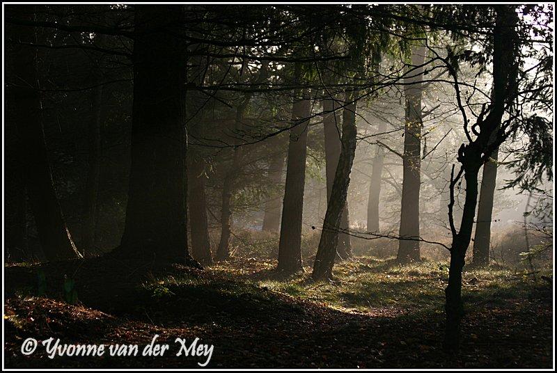 Magisch bos (Copyright Yvonne van der Mey)
