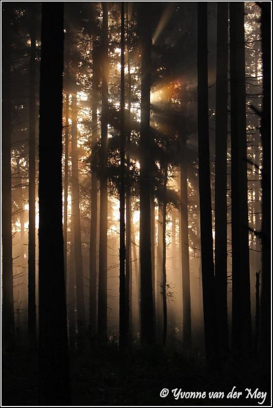 Ochtendsfeer leuvenumse bossen (Copyright Yvonne van der Mey)