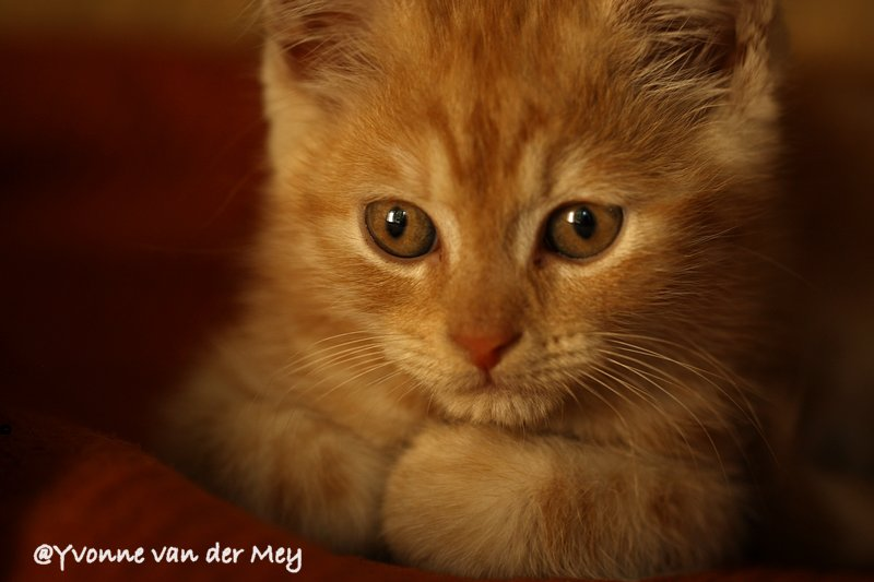 Pluisje close up (Copyright Yvonne van der Mey)
