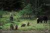 Groep-wilde-zwijnen-bij-de-zoel-copyright-YvonnevanderMey